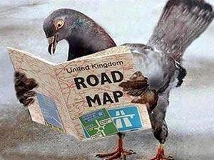 Средняя скорость полета почтового голубя составляет 90 километров в час