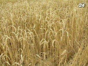 Аграрии прогнозируют увеличение объемов экспорта в этом году