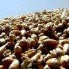 Экспортную зерновую квоту могут увеличить