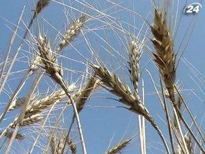 Украина ввела квоты на экспорт зерна
