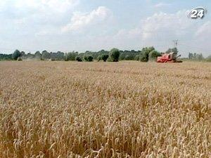 Украина распределила квоты на экспорт зерна