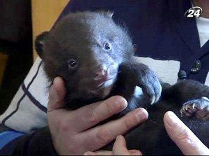 В Бердянске гималайские медведи рождаются вторично