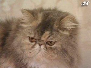 Во всем мире отмечают праздник кошек