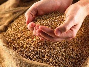 Ранее Присяжнюк не исключил отмены правительством Украины квотирование экспорта зерна