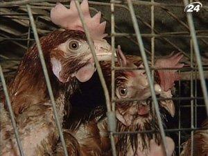 Украина прекратила расследование курятины из Америки