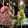 Представлены цветы, кусты и деревья из разных регионов
