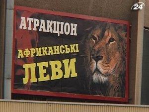 Лев напал на дрессировщика во время представления в Львовском цирке