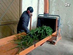 Новогодние красавицы перерабатывают на брикеты и мебель