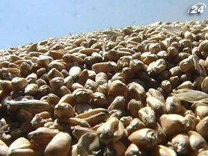 Прием заявок на получение разрешения на экспорт зерна продолжается