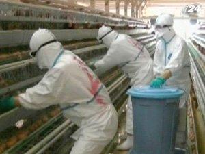В Японии из-за вспышки птичьего гриппа армия уничтожает кур