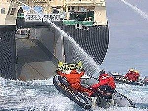 Япония до сих пор убивает сотни китов ежегодно