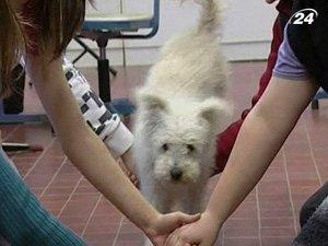 Ассистент учителя - пес Нудли