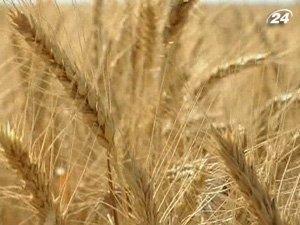 Украина может удвоить производство зерна