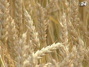 Минагро допускает отмену квотирования экспорта зерна