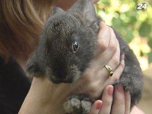 Тех, кто родился в год кролика и кота - ожидают сюрпризы
