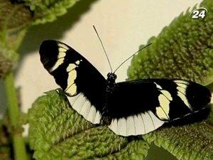 В Колумбии пропонуютьздивуваты свою половинку в День влюбленных бабочками
