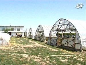 Специфика агробизнеса заключается в сезонности