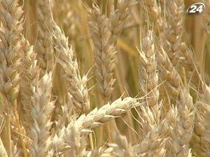 Украина поставит России 2 миллиона тонн фуражного зерна