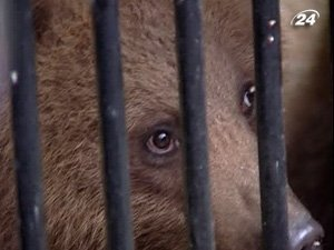 В столичном Зоопарке появилась пара бурых медвежат