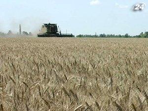Квоты на экспорт зерна могут отменить