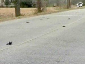 В провинции Квебек мертвыми с неба упали 80 голубей