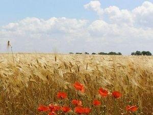 Астрологи обещают хороший урожай летом 2011-го