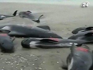 Массовое самоубийство черных дельфинов