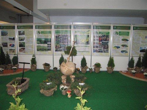 выставка лес 1