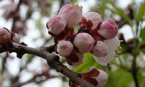 Весна пришла ...