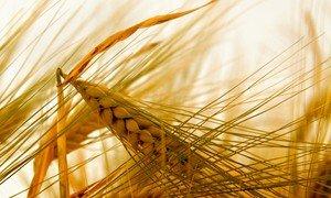 География сбыта зерновых расширится