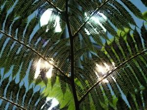 Индукционные лампы нашли применения в оранжереях